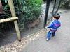 tilburg_9_019 (OurTravelPics.com) Tags: tilburg max with caracal dierenpark de oliemeulen zoo