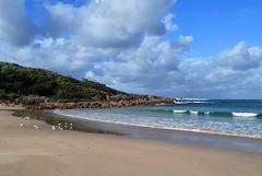 Beachly calm (Nelson~Blue) Tags: little beach calm port stephens anna bay boat harbour sun sunny seagulls sea gulls