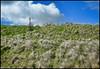 Warkworth To Alnmouth Walk, Northumberland, UK - 2018 (John Mac 2011 UK) Tags: alnmouth johnmacstravelphotography johnmacsweeklywalkswiththeladslasses2018 northumberland northumberlandcoast stcuthbertscross thenorthofengland uk unitedkingdom warkworthtoalnmouthwalk