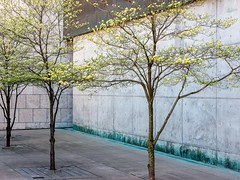 Trees at the Freedom Center (Referenceace - Working!) Tags: 2018 45mm architecture cincinnati city downtown may micro43 mirrorless ohio panasoniclumixg5 spring urban