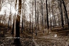 2018-4-17 Muziekbos Ronse 239 a (Jacques Sper) Tags: bos forest bw zw outdoor zon sun ronse muziekbos