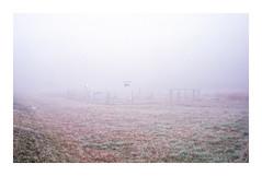 * (Daniel Espinoza) Tags: agfa400 contaxtvsii film fog winter filmphotography minimal danielespinoza schweiz suisse switzerland analog analogica pellicola fineart landscape