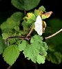 Moth (T's PL) Tags: leafs moth nikon nikontamron nikond7000 nikondslr tamron16300mm tamron16300mmf3563diiivcpzdmacro virginia va