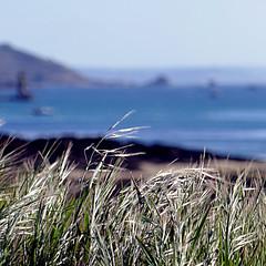 Île-Grande, Bretagne, France (pom.angers) Tags: panasonicdmctz101 may 2018 europeanunion france bretagne 22 côtesdarmor pleumeurbodou manche océanatlantique atlanticocean lannion perrosguirec grass sea beach 100 200 îlegrande
