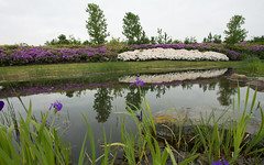 Japanese garden (M a u r i c e) Tags: garden utrecht netherlands flowers water reflections cloudy clouds trees nature landscape white purple stone rock pond park maximapark
