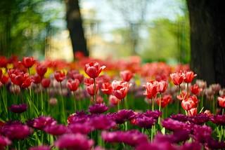 Буйство красок и праздник цветов в ЦПКО