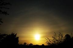Halo Sunrise..x (Lisa@Lethen) Tags: halo weather sunrise sun cloud crystals nature silhouettes garden
