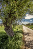 Country side (Pablos55) Tags: campagna countryside albero tree strada viottolo pathway