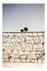 MG6879 (eleni.makrydaki) Tags: lonelytree stonewall behind sandybeach urbanexploration