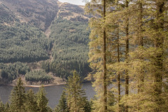 Loch Eck Above Dornoch Point (Click And Pray) Tags: managedbyclickandpraysflickrmanagr locheck above landscape horizontal argyll lake scotland trees forest shoreline beach locheckabovelandscapehorizontalargylllakescotlandtreesforestshorelinebeachgbr