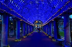 Like stars in the sky - Blue Blue Blue (ole_G) Tags: christophercolumbuspark boston