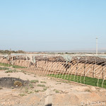 Agricultural structures on the road to Turfan thumbnail