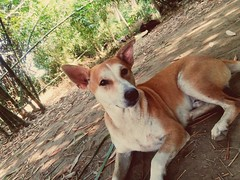 A Doggy.... (argharaha123456) Tags: dog animal wallpaper explore ogq photography