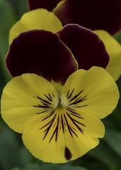 Flower garden (billcoo) Tags: xf80mm fujifilm plant bokeh fujinon macro xf14x