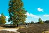Utrechtse heuvelrug- A Photographer (peterpj) Tags: rawtherapee ütrechtse heuvelrugsonya6300sigma 30 14 c nederland utrecht bomen trees clouds fotograaf landscape landschap