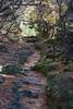 IMG_6680_01 (TassieJohn) Tags: tasmania australia cradlemountainlakestclairnationalpark fagus mountains fungi lakes tarns
