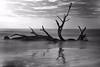 LCS Saturday Mono Drifty (Montwerx) Tags: lowcountrysunsets lowcountrysunsetsonfacebook mdggraphix jekyllisland sunset sunrise goldenhour myskies monochrome blackandwhite longexposure driftwood driftwoodbeach