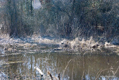 Волинське болото InterNetri Ukraine 05