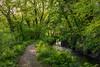Tavistock Canal Quay (trevorhicks) Tags: westdevondistrict england unitedkingdom gb tavistock canal quay forest woodland water pathway walk leaves spring canon 5d mark iv 50mm prime