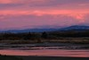 First light - Ashley estuary (Maureen Pierre) Tags: firstlight sunrise ashleyestuary fuji fujifilm xt2 cloudsstormssunsetssunrises clouds