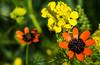 El alma de las cosas (Jesus_l) Tags: europa españa valladolid provincia floressilvestres jesúsl