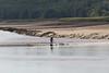 Nith_BoreSUP_0509 (yepabroad) Tags: nith bore pororoca mascaret scotland dumfries glencaple malouine inshore rescue paddlesurf sup bird