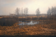 (decemberGirl.) Tags: spring trees birches landscape russia water