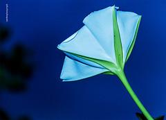 flores, verde, natureza, colorido (luizleitefotografia) Tags: folhas galhos verde branco pétalas cores cor colorida vermelho gotas pingos flor florido lizo suave fundo preto contraste textura claro luz dia noite sãopaulo brasil