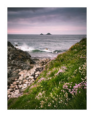 The Cot Valley (Dave Fieldhouse Photography) Tags: cotvalley porthnanven stjust cornwall cornwalllife coast thebrisons islands beach wildflower spring springtime seaside northcornishcoast sunset dusk evening clouds cloudy rocks grass waves hightide fujifilm fuji fujixt2 wwwdavefieldhousephotographycom thrift portrait seascape