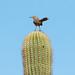 Prickly Perch