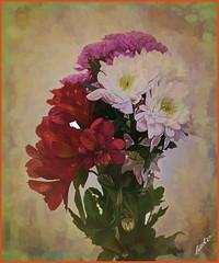 Supermarket selection (JAKE473) Tags: supermarket flowers