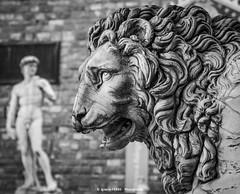 The beast and the handsome (Ignacio Ferre) Tags: italy italia toscana tuscany florencia floréncia firenze fiorence león lion feline art arte loggiadeilanzi nikon statue estatua david beast handsome