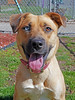 Lovey (1) (AbbyB.) Tags: dog canine rescue adopt animal shelter pet mtpleasantanimalshelter easthanovernj petphotography shelterpet
