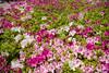 flowers (Hideki Iba) Tags: 花 plant 植物 nikon d850 2470 japan daytime peace