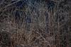 DSC_7058 (andrey.salikov) Tags: 180550mmf3556 jurmala magnifique nikond60 atmosphere atrevida balticlights beautiful buenisima city colour colourfulplaces dreamscene europe fantastic fantasticcolors fantasticplaces foto free goodatmosphere gorgeous harmonyday2018 harmonyvision impressive latvia latvija lettland lettonia light lovely mood moodshot nice niceday niceimage niceplace ottimo peacefulmind photo places relaxart riga scenery sensual sensualstreet spring streetlight stunning superbshots tourism travel trip wonderful юрмала весна отпуск туризм чудесно