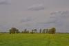 a meadow in Drenthe (Johan Moerbeek) Tags: roderwolde drenthe grasland meadow weide groen grass landschap landscape clouds wolken