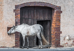 Horse (Ignacio Ferre) Tags: horse caballo animal mammal mamífero españa spain segovia comunidaddecastillayleón nikon retrato portrait ngc