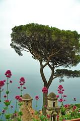 Ravello (letkata) Tags: ravello villaruffolo amalficoast costeiraamalfitana flower italy italia campania salerno sea