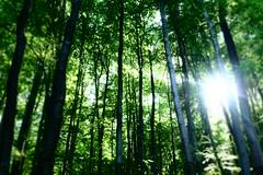 Spring Forest (Johannes Ortner) Tags: countrycodeat frühling gegenlicht laub wald wien grün österreich flickr farbe jahreszeiten fotospezial natur flora blatt at