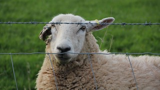 Baarbed Wire Fence
