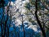 Puffy clouds overhead (brooklandsspeedway) Tags: lockridge alburtis pennsylvania lehighcounty lehighvalley