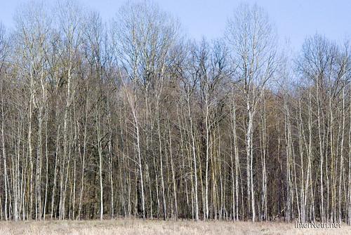 Волинський ліс InterNetri Ukraine 0957943596
