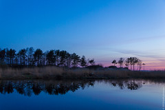 serenity on the sunset glow (kirill3.14) Tags: grass sun spring beach sunset river sosnovybor gulf creek sky outdoor reflection trees water clouds