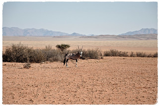 Magical Places and Things- Namibia- The Namib Desert