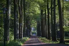 Boslaan (Jos Mecklenfeld) Tags: boslaan westerwolde forest wald bos road straat weg strase sonya6000 sonyilce6000 minoltamdzoom2870mmf3545 minoltamd minolta terapel groningen netherlands nl