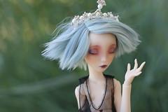 phyllida (persephassa) Tags: lillycat chibbi moon bjd 16 jiajia cecie studios frappzilla