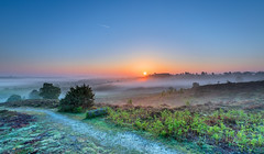 Burning Off The Mist (nicklucas2) Tags: newforest rockfordcommon mist bracken tree sunrise sun log path