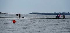 A (SociétéRoyale) Tags: marine lake west kirby walking sea river dee merseyside high tide wirral