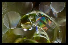 technicolor wetcoat (pete ware) Tags: water sporophyte macro peteware