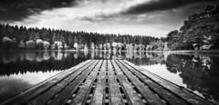 Shearwater1 (Digitalwolfphotography) Tags: trees water jetty lakes landscape longexposure blackandwhite nude mono